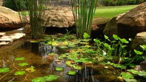 Toadally awesome toad facts notes on frog pond design for Small frog pond ideas
