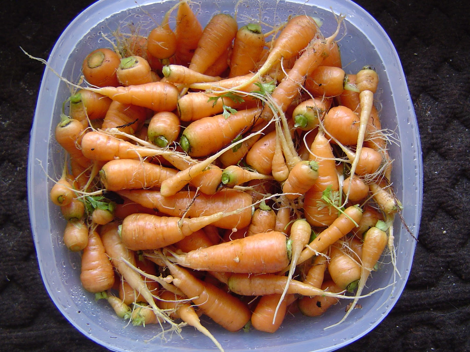 What a Healthy Family Eats: Garden Goodness: Baby Carrots