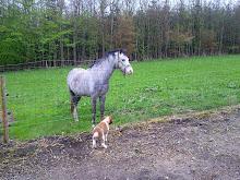 Hadet bra, hesten!.....