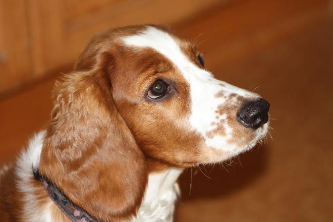 Belle ca 1/2 år gammel