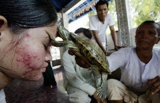Лечение ревматизма черепахой