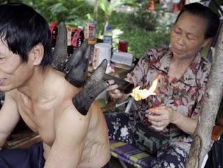 Лечение рогами животных