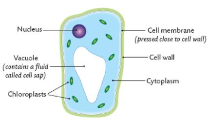 cells are specialized for