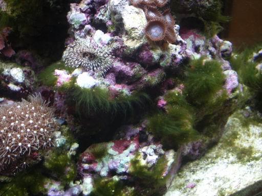 Le blog du site algues filamenteuses for Densite du verre a vitre