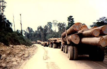 Rolling Out The Timber Wealth of Sarawak