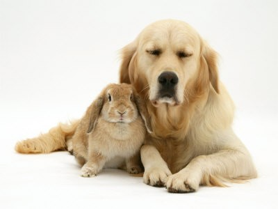 dog-rabbit+photo.jpg