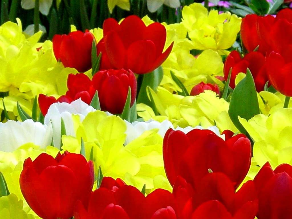 Pictures of Flowers Flower Pictures free pictures wallpaper