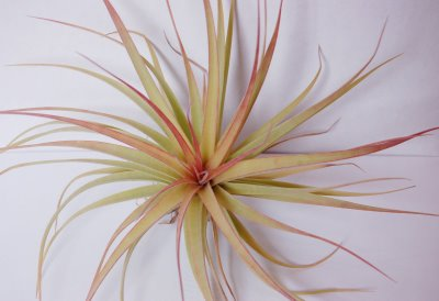 [airplant+22]