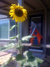 Volunteer Sunflower and Uncle Stan's Birdhouse