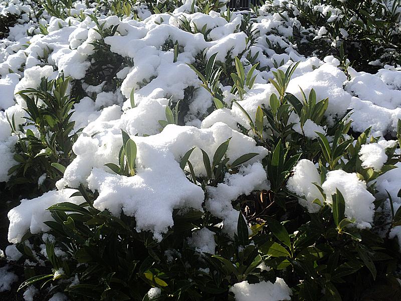 Первый снег в Ванкувере