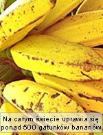 owoce banany - ciekawostki