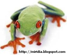 Vtip dne: Žába a hulení