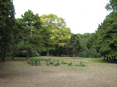A fák nyugalma