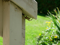 Large Spider Ontario Canada