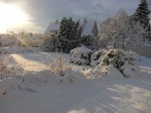 Vinter i hagen