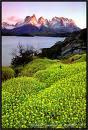 La primavera en las torres del Paine