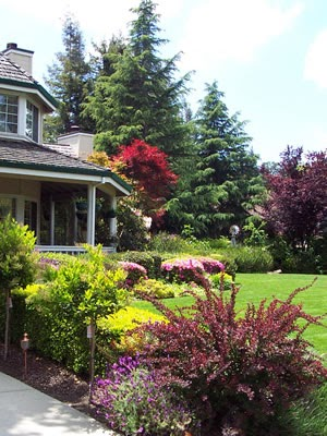 Gift plants and plant ideas different front yard garden for Different landscaping ideas