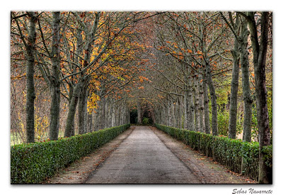 Recordando y un grato encuentro [Sunny] Jardines+Aranjuez+atardecer++de+dieciembre+6+copia