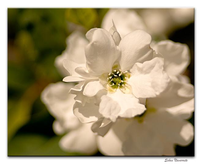 Flores del parque