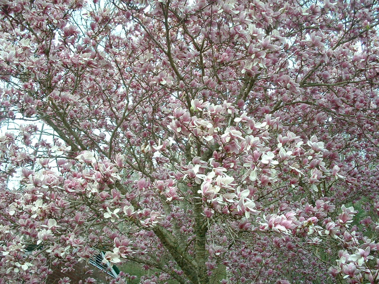 appalachian spring Appalachian spring is within the scope of wikiproject classical music, which aims to improve, expand, copy edit, and maintain all articles related to classical music.