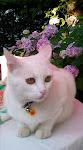 LISA, guapa, cariñosa!!