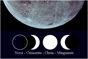 Determinacion de taninos por espectrofotometria 79
