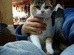Adopt a Pet!!!