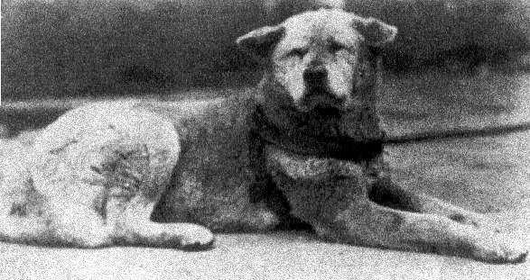 hachiko el perro fiel historia verdadera