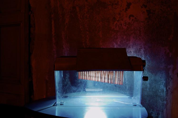 Wortweding May 2010 (artist residency) Berlin