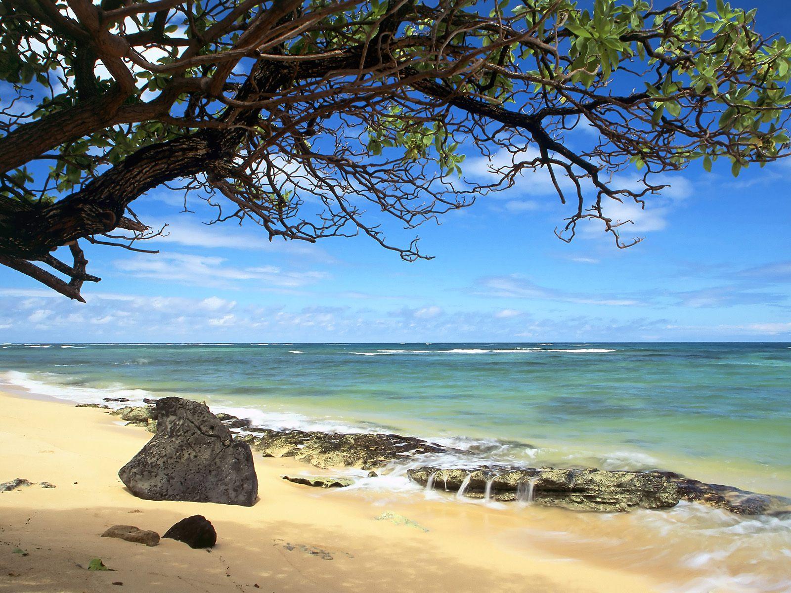 [Kanenelu+Beach,+Oahu,+Hawaii.jpg]
