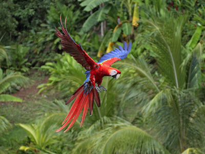 parrot_pictures