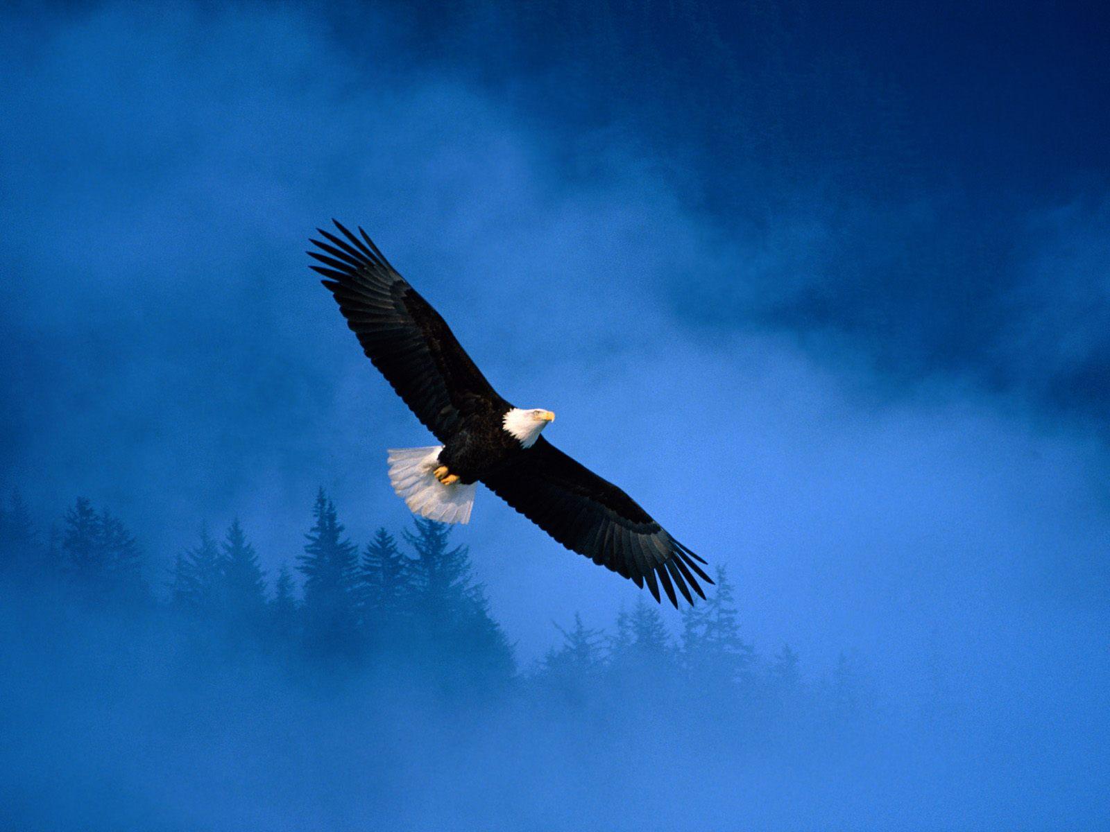 http://1.bp.blogspot.com/_2IU2Nt4rD1k/S7em_bcyhfI/AAAAAAAABUY/7kGia0EKZAM/s1600/Eagle-Pictures-90.jpg