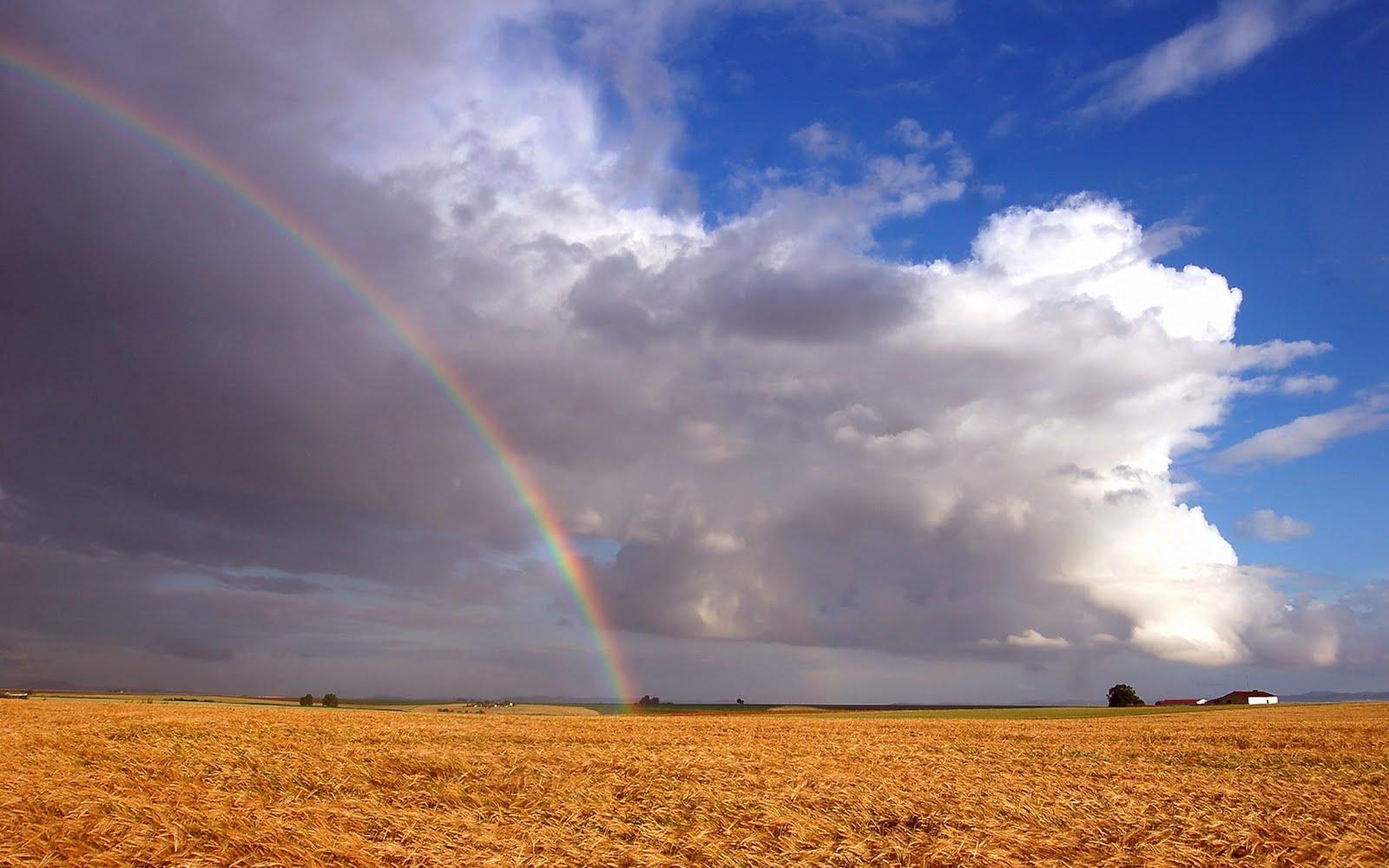 http://1.bp.blogspot.com/_2IU2Nt4rD1k/TDorD2cFxRI/AAAAAAAAB3M/t2THtAPVs1k/s1600/rainbow_wallpaper.jpg