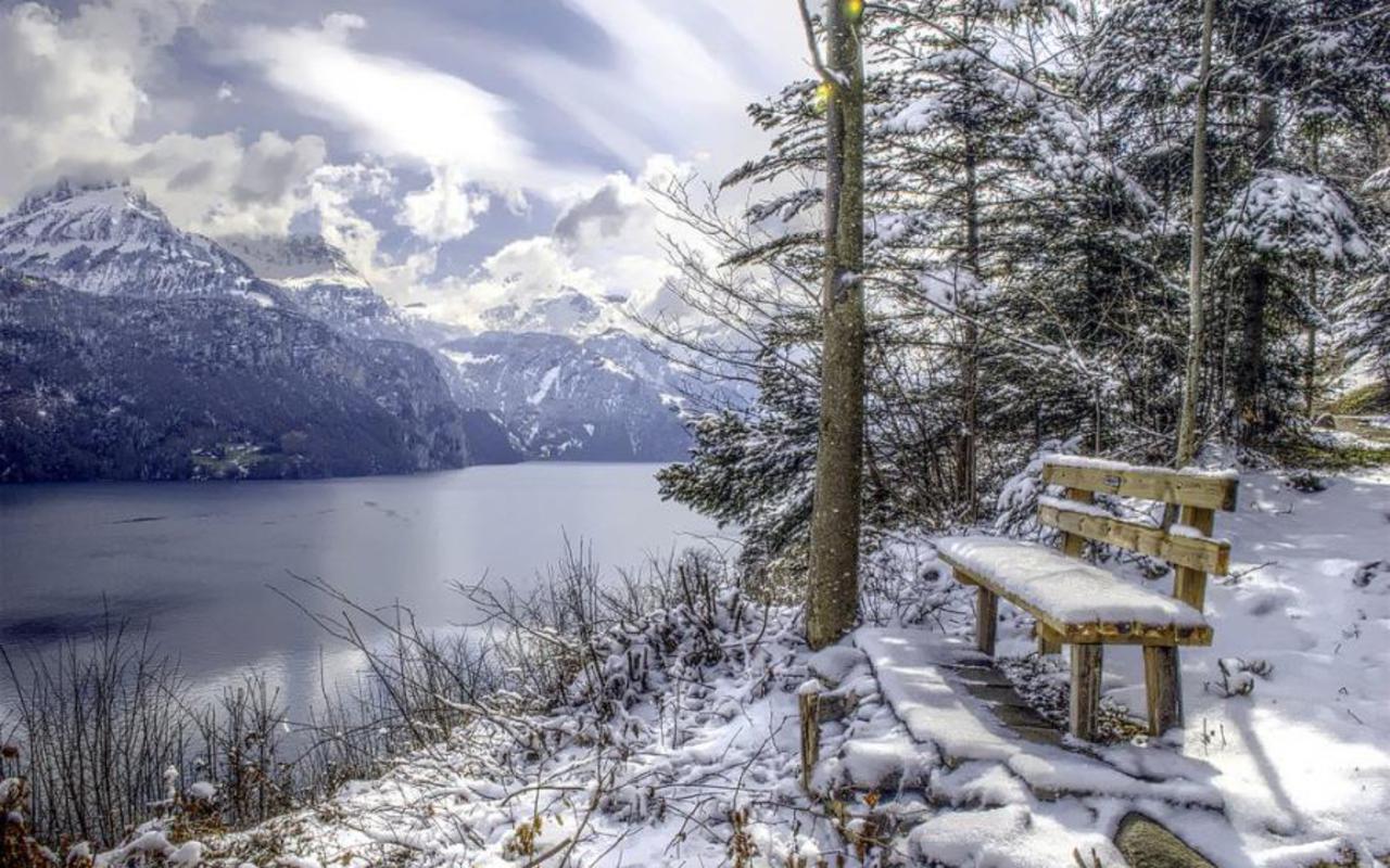 forest in the mountain winter season hd desktop wallpaper