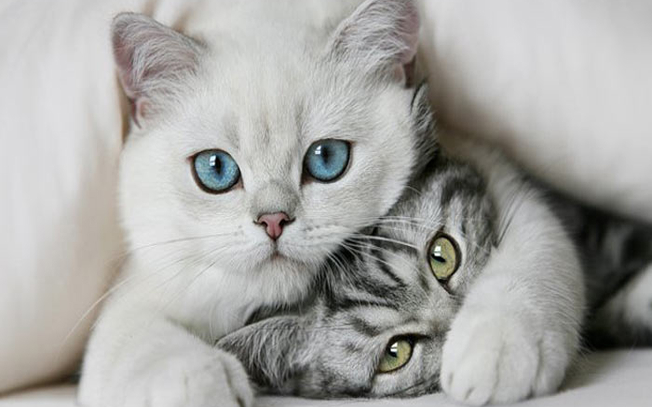 Poze cu pisicute frumoase