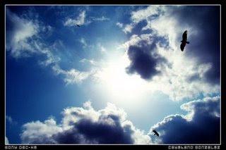 external image cielo+y+pajaros.jpg