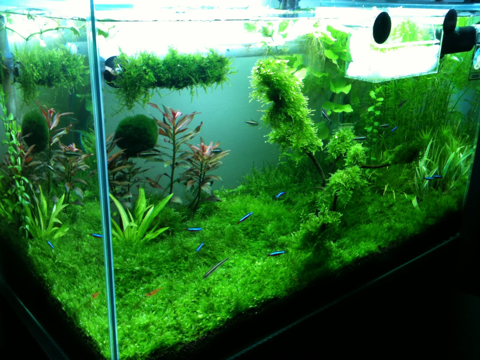 Planted aquarium fans for Plante aquarium