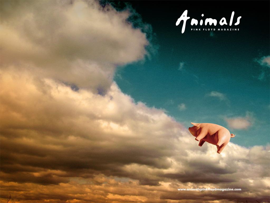 http://1.bp.blogspot.com/_2KT2PNBcWyE/TEEDpF_vvNI/AAAAAAAAAN4/rGLQX9sfCWc/s1600/Animals.jpg