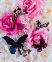 Flowers & Butterflies