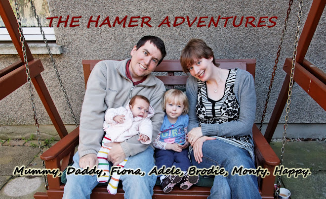 The Hamer Adventures