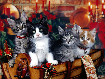 Merry Christmas Kittens