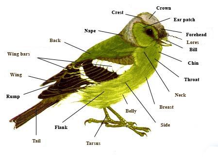 Peduli terhadap hewan peliharaan &;burung&;