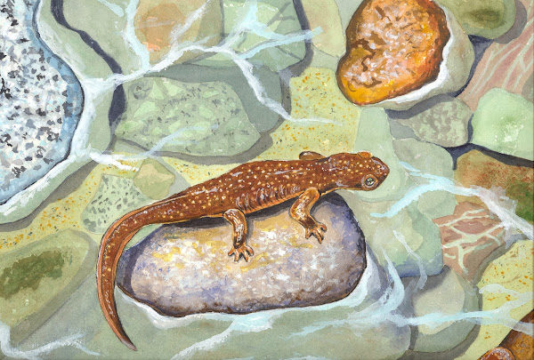 Watercolor of Sierra Newt