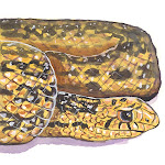 Gopher Snake