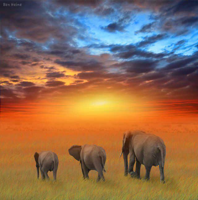 fotos de animales de africa - Fotos de la caza furtiva y brutal de animales salvajes en África
