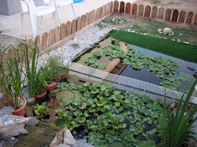 Mis tortugas acu ticas mis plantas for Plastico estanque