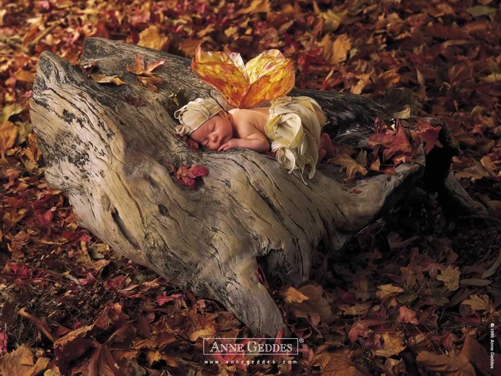 http://1.bp.blogspot.com/_2QHcx0puPFg/S_z_TcmNZUI/AAAAAAAAVRI/qoVxySy95bE/s1600/angel-baby-wallpaper-sleeping-baby.jpg