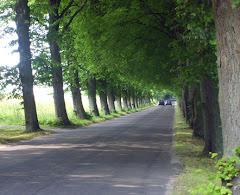 Polska droga. Foto: Marek Szałański