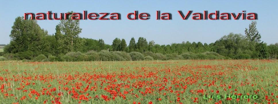 Naturaleza de la Valdavia