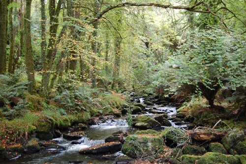 Grouss'arteg Vegetation